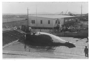 Byron Whaling